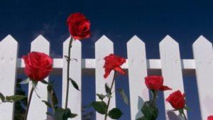 Blue Velvet Opening Scene - Surrealist Film